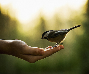 animals, bird, and green image