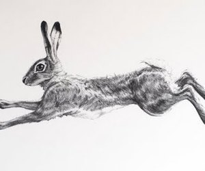 bunny, illustration, and rabbit image