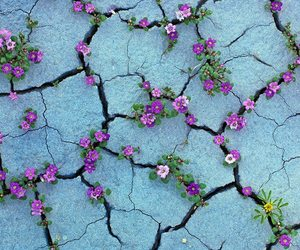 cracks, flowers, and nature image
