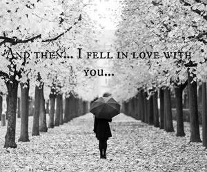 black and white, tree, and umbrella image