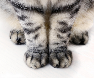 animal, cat paws, and gato image