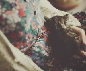 cat, vintage, and photography image