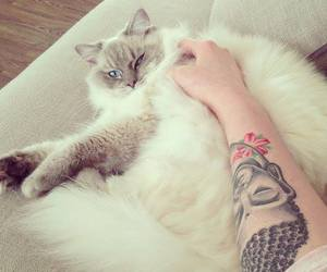 cat, tattoo, and ink image
