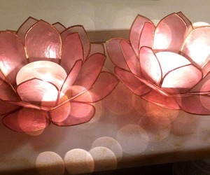 candle, light, and lotus image