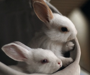 bunnies and cute image