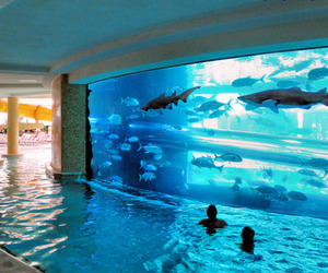 shark, pool, and water image