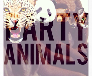 animals, swag, and yolo image