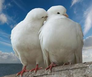 close, white, and love image