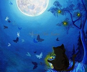 cat, butterfly, and night image