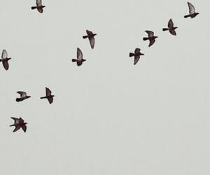 bird, iphone, and wallpaper image
