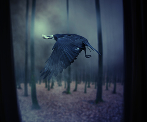 crow, forest, and horror image