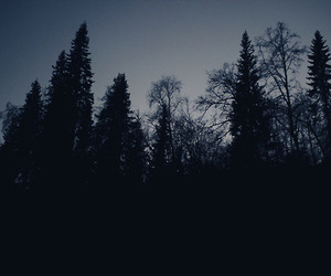 dark, forest, and night image