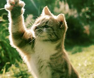 cat, grass, and kitten image