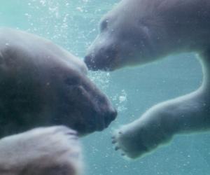 arctic, bear, and grunge image