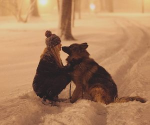 dog and snow image