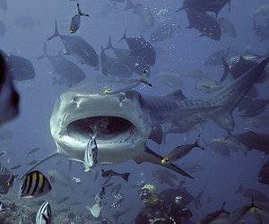 shark, fish, and picture image