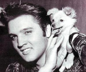 black and white, dog, and elvis image