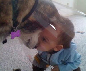 dog, cute, and baby image