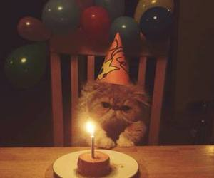 cats, fofo, and happy birthday image