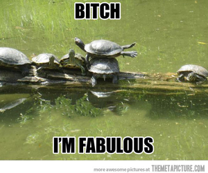 turtle, fabulous, and funny image