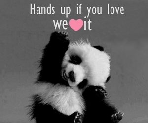 love, cute, and panda image