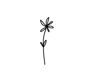 flower, white, and hand drawn image