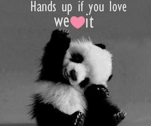 animals, pet, and quotes image