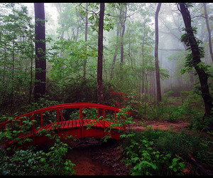 bridge, forest, and red image