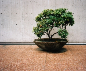 bonsai, concrete, and bowl image