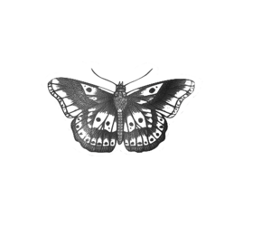 Harry Styles and butterfly image