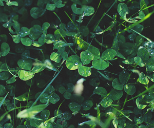 book, clover, and green image