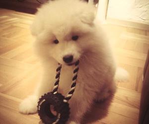 <3, dog, and Samoyed image