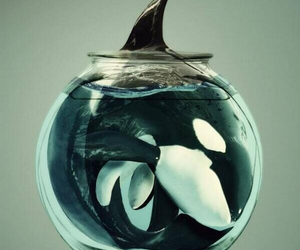 orca, whale, and blackfish image