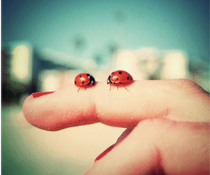 finger, lady bugs, and red image