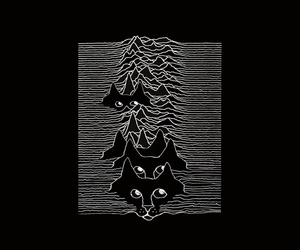 cat, joy division, and ian curtis image