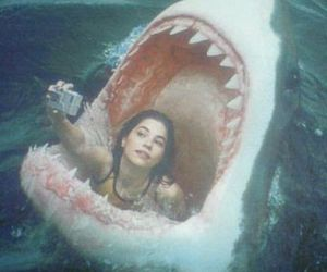 shark, photo, and selfie image
