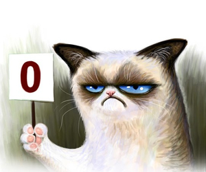 cat, funny, and grumpy image