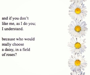 daisy, love, and quotes image