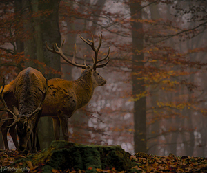 autumn, deer, and fall image