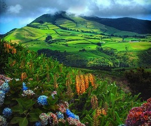 azores, travel, and flowers image