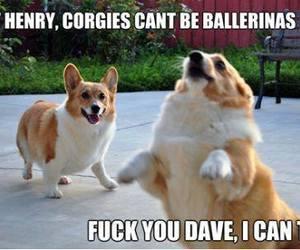 corgi, dog, and funny image