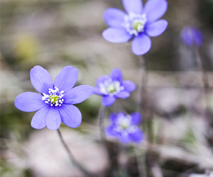 blue, photography, and flower image