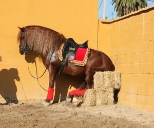 andalusian, dressage, and equestrian image