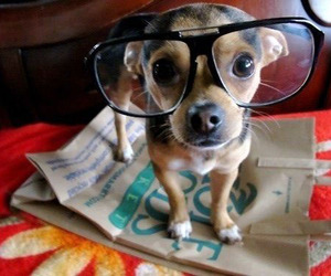 glasses, puppies, and puppy image