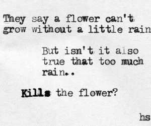 flowers, quotes, and rain image