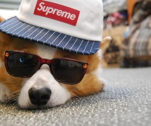 dog, cute, and supreme image