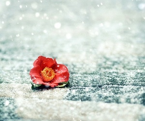 snow, flower, and beautiful image