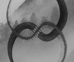 snake, black and white, and symbol image