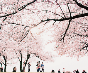pink and sakura image