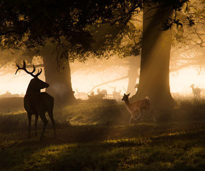 deer, Dream, and hipster image